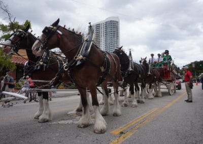 closeup of clydesdales