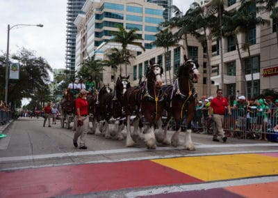 clydesdales marching