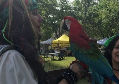 parrot and pirate